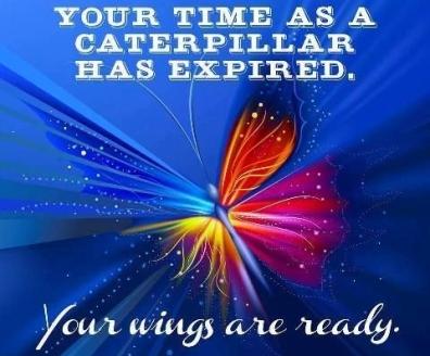 wings-are-ready.jpg